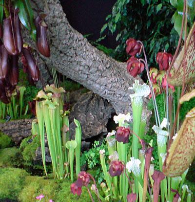 Jardim com plantas carnívoras